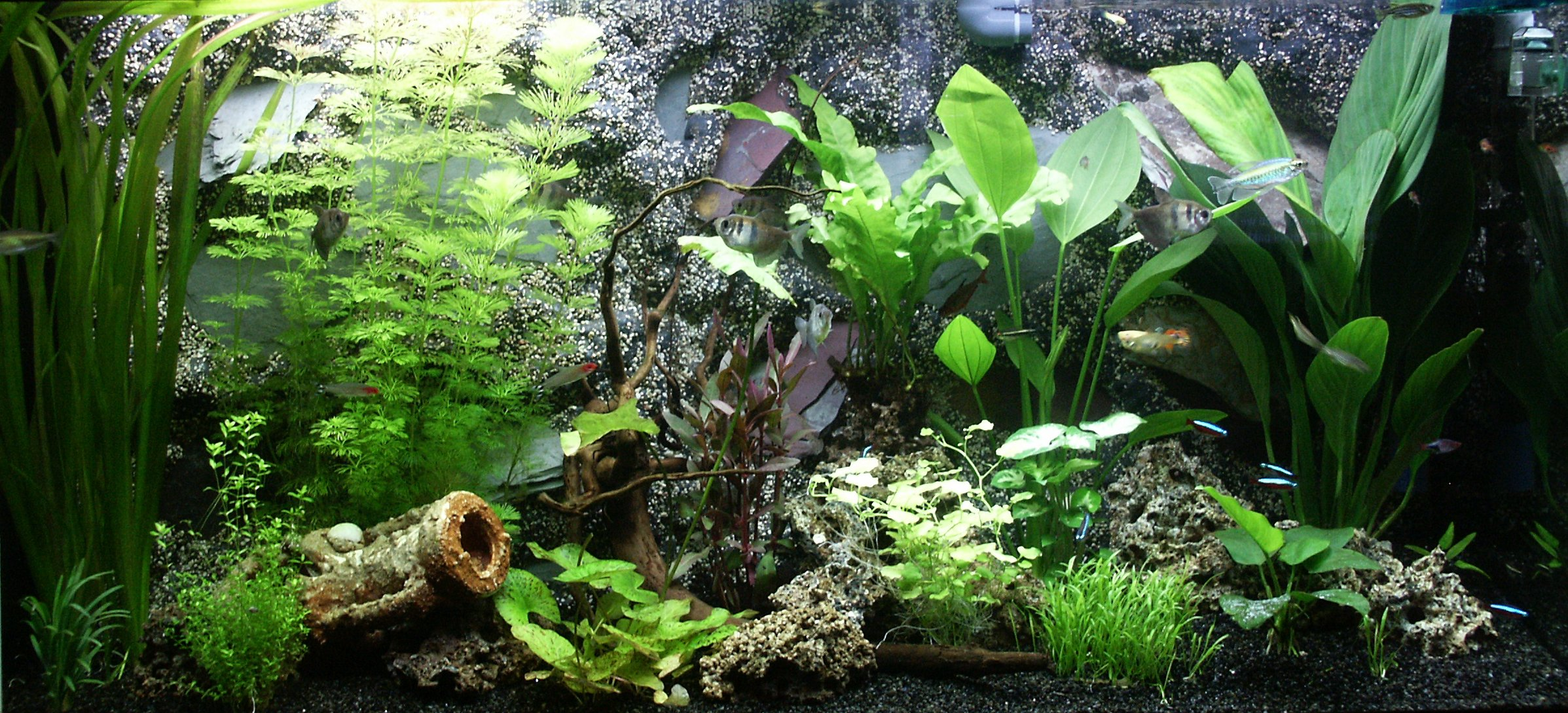 how to replace old fish tank gravel